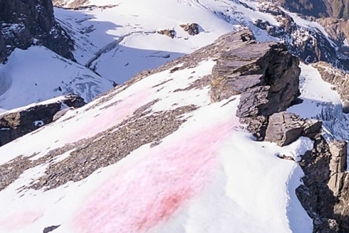 Swiss Snow Algae