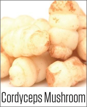 Cordyceps Mushroom in MOA