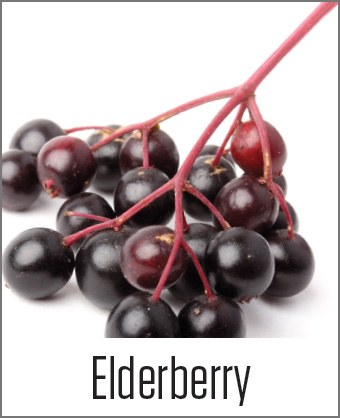 Elderberry in MOA