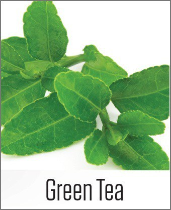Green Tea in MOA