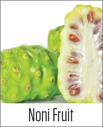 Noni Fruit in MOA