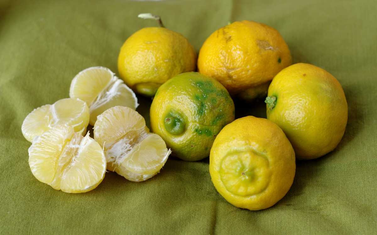 The Wonders of Bergamot Oil