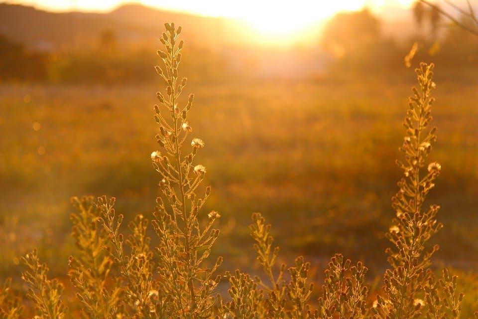 VITAMIN D: Getting Enough of the 'Sunshine' Vitamin