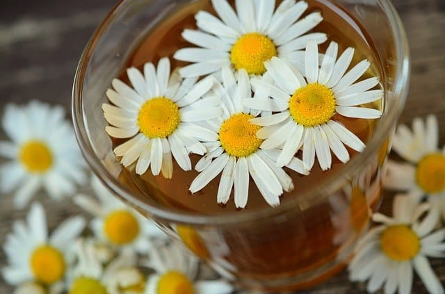 chamomile and its benefits
