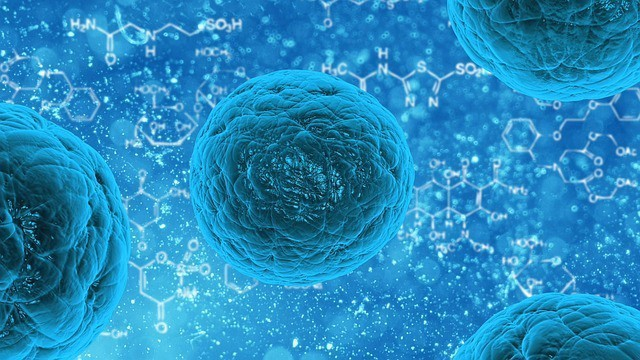 Buddleja Stem Cells vs Human Stem Cells