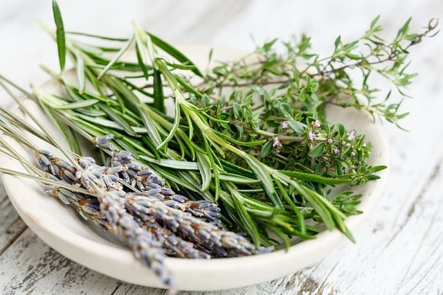 Rosemary: More than just a culinary herb