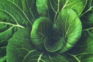 leafy greens restore your ph levels